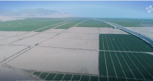 KAUST Research: Improving water security for food crops